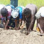 … mira ad ampliare la superficie coltivata…