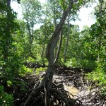 … a preservare l'ecosistema.