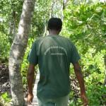 Passerella nel mangrovieto.